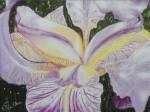 Iris 3 / pastel sec
