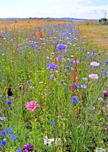 Perspectives florales / photo N. Le Clerc