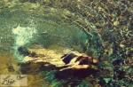La plongeuse