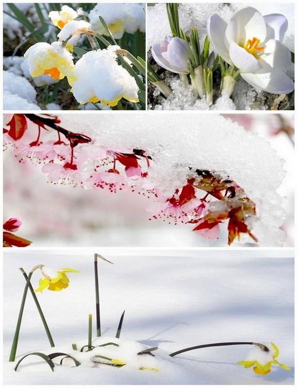 Début du printemps