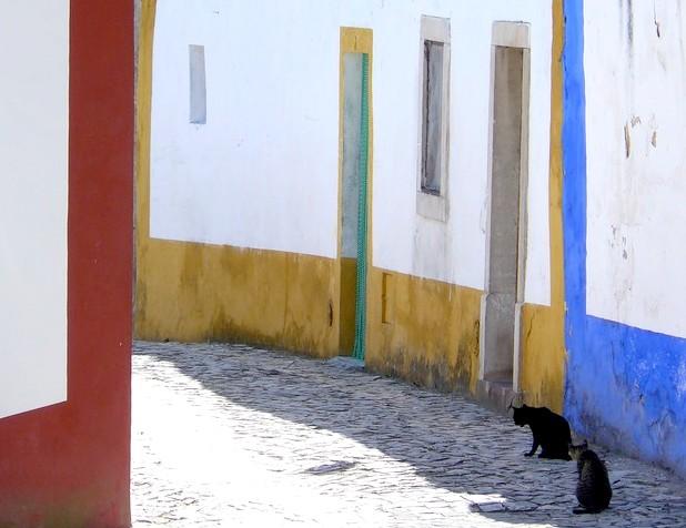 Fraîcheur féline au Portugal